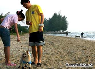 Hunde in Thailand