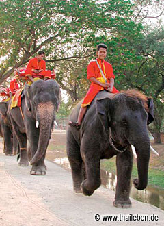 Beliebte Touristenattraktion: Ein Ritt auf dem Elefanten am Elephant Camp.